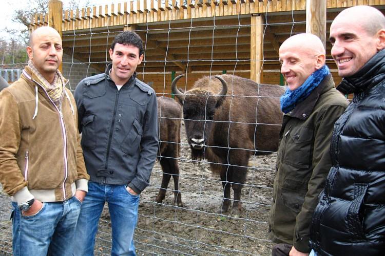 Cobo en la Reserva del Bisonte Europeo