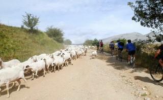 Las vías pecuarias tienen un uso común tanto para el traslado de ganado como en el tránsito de las BTT.