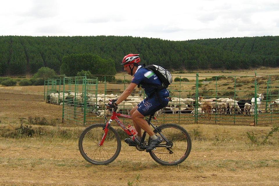 La segunda ruta cicloturista transitará por el Cordel Cerverano, una olvidada vía pecuaria